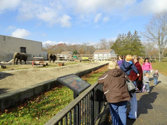 Buttonwood Park Zoo : Elephants had plenty of room