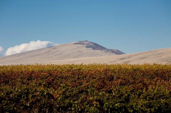 Kiona Vineyards and Winery: Kiona Estate vineyard and Rattlesnake Mountain