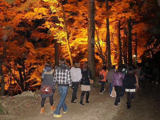 Korankei : ライトアップ