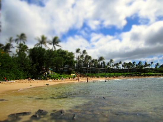 Kapalua Beach: Great spot to see some turtles