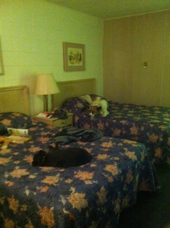 Westgate Inn : dogs sleeping after a long day