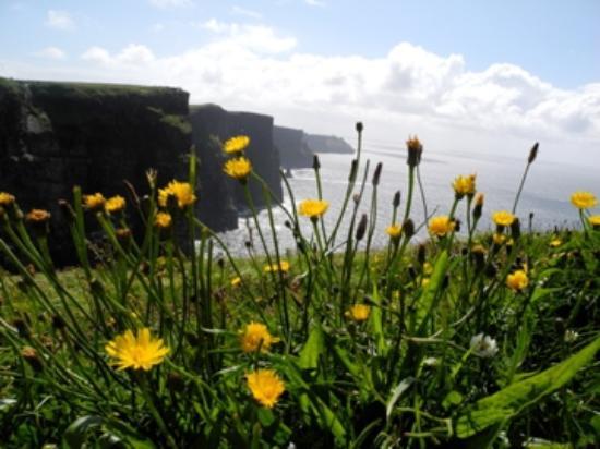 Celtic Compass Tours Day Tours : the cliffs