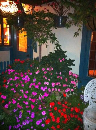 Normandy Inn: pretty flowers 2012