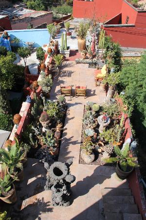 Casa Cinco Patios: Love this cactus garden!!