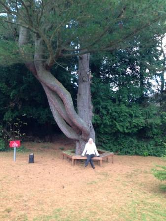 Loch Ness Country House Hotel at Dunain Park: old tree for a quiet moment