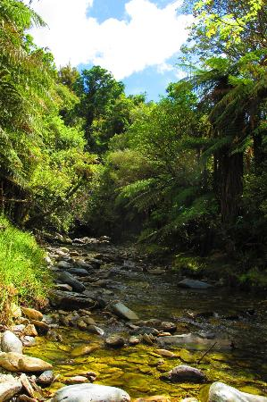 On The Track Lodge: Native Punga and fern bush walk