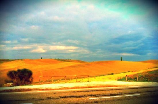 Montalcino, Italy: vineyard