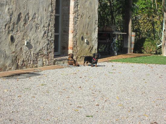 Agriturismo Casa Fabbrini: The lovely Fabbrini dogs