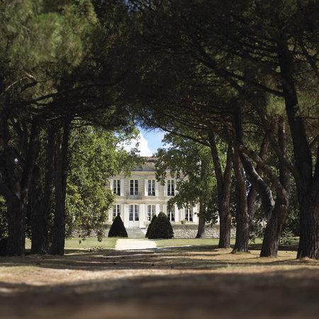 Château de La Dauphine: Allée de pins parasols