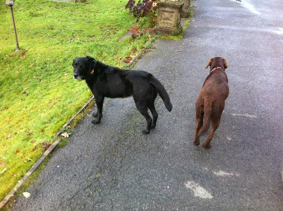 The Lake Country House & Spa: The hotels two dogs