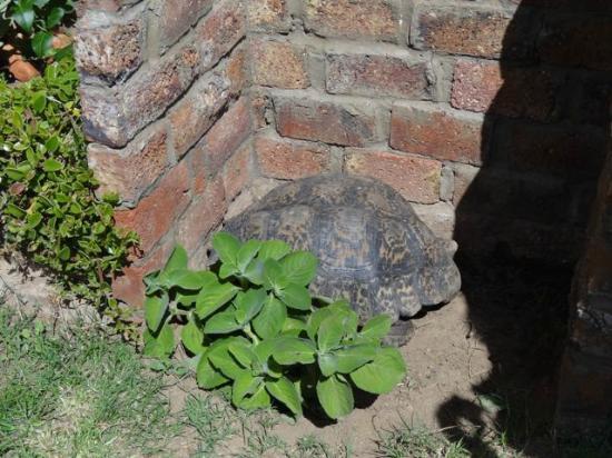 Frischgewaagd Guesthouse: Mit Schildkröte