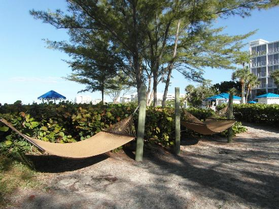 Guy Harvey Outpost, a TradeWinds Beach Resort: Hammocks in a private area were a nice touch.
