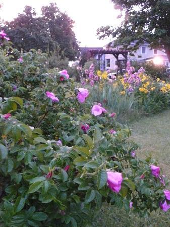 Victoria Inn: Gardens