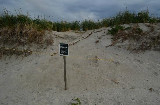 Crane Beach: don't walk on the dunes.....