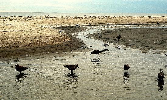 Crane Beach: sandbar guests