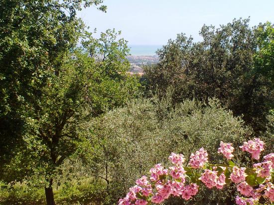 Colle Moro Resort - B&B Villa Maria: Ulivi e Mare