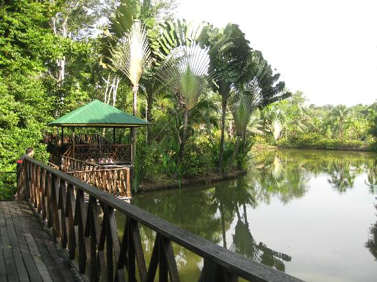 Sepilok Jungle Resort: le chemin vers le restaurant