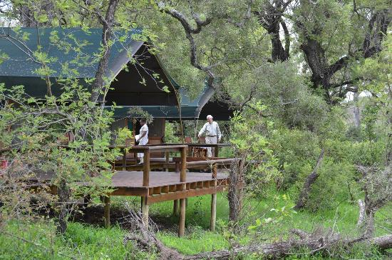 Simbavati River Lodge: The 'tents'