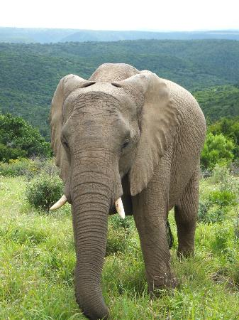 Kariega Game Reserve - All Lodges : the locals