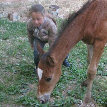 Children and horse at Santa Maria a Poneta