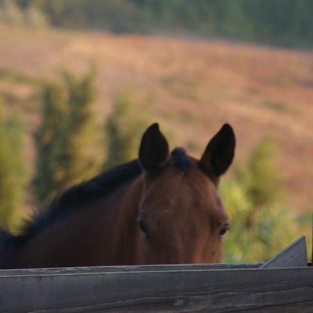 Santa Maria a Poneta: horse breeding in Tuscany