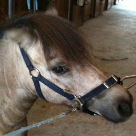 Santa Maria a Poneta: horse riding in Tuscany