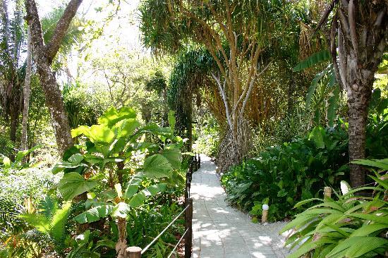 Ylang Ylang Beach Resort: The paths