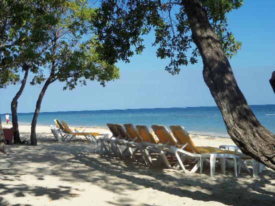 Iberostar Rose Hall Beach Hotel : we sat under the trees on the beach!!