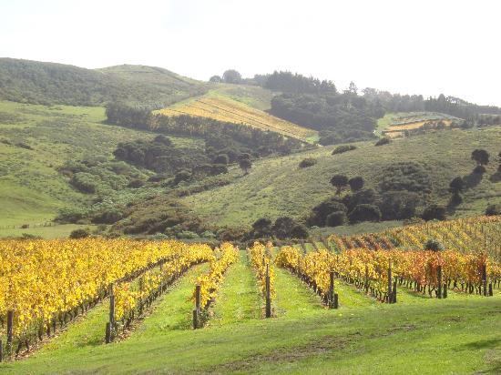 Waiheke Adası, Yeni Zelanda: Stonyridge Vineyard