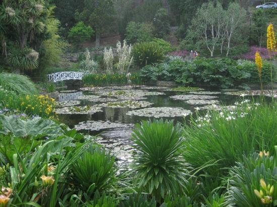 Royal Tasmanian Botanical Gardens: waterlily pond
