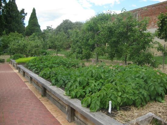 Royal Tasmanian Botanical Gardens: the veggie patch 