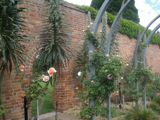 Royal Tasmanian Botanical Gardens: rose garden