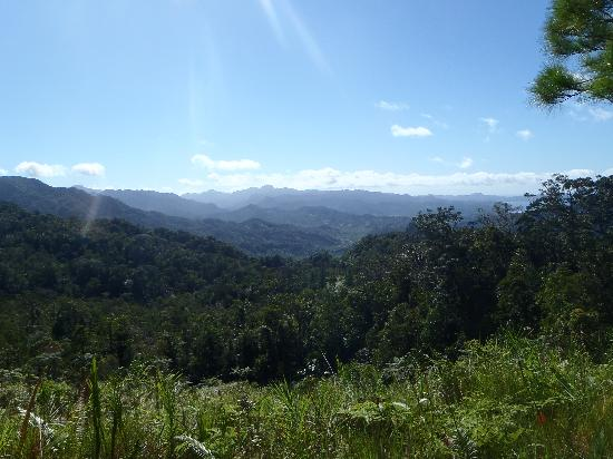 Waisali Rainforest Reserve