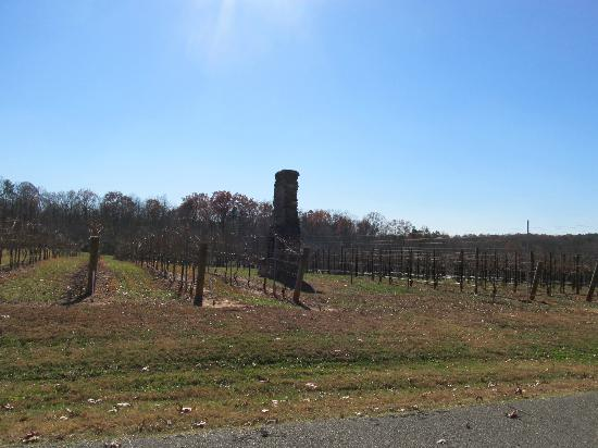 Dobson, NC: Another view of the vineyard at Surry CC College