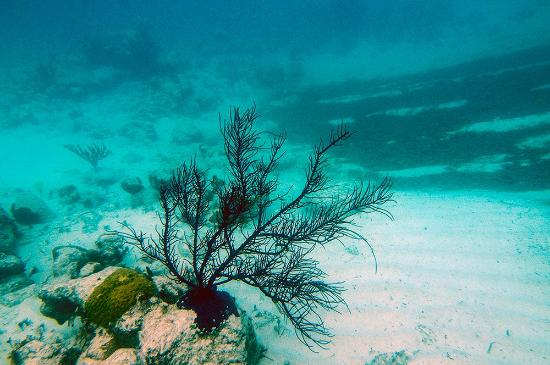 Coral Gardens Picture Of Bight Reef Providenciales Tripadvisor