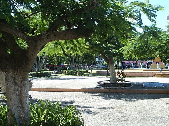 Yucatan, México: Jacaranda Trees