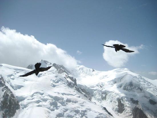 Chamonix Mont Blanc: Free like a bird