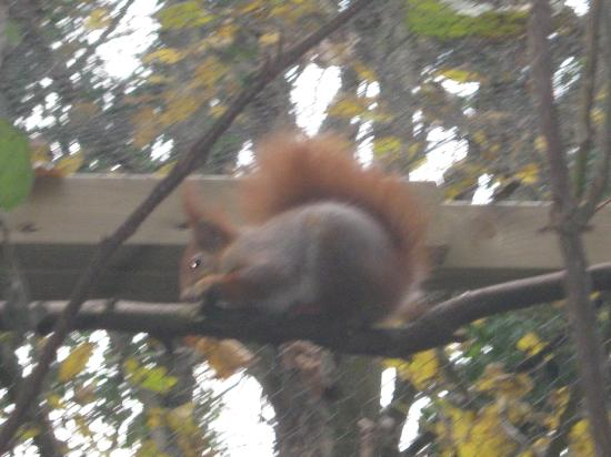 Natural Surroundings: Red Squirrel