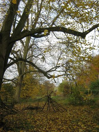 Natural Surroundings: Trees in autumn