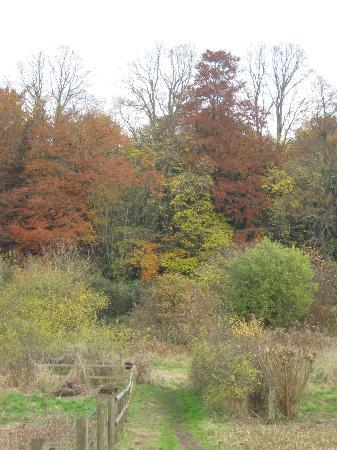 Natural Surroundings: autumn colours