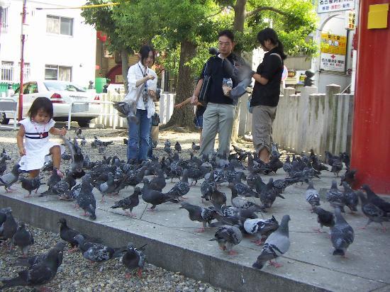 Ναγκόγια, Ιαπωνία: Bird Osu Temple