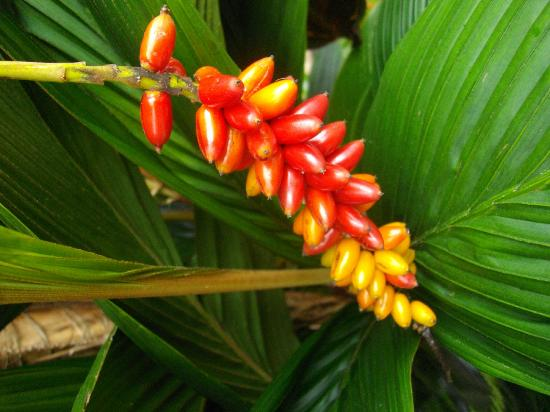 Freestyle Resort Port Douglas: More tropical flowers in the grounds
