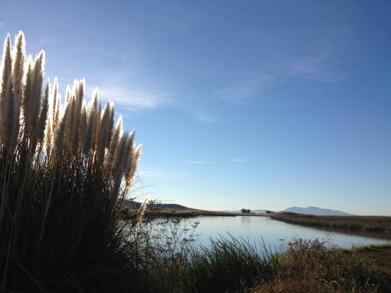 Suisun City, Kalifornien: down the hiking path from the boat ramp