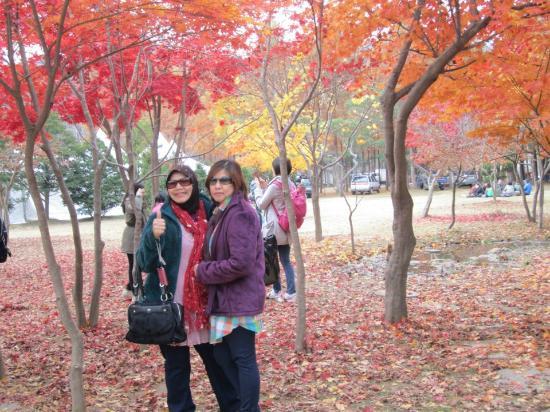Nami Island: Colorful autumn leaves