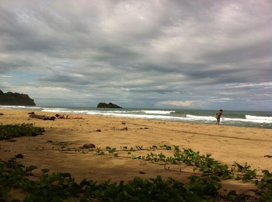 Cariblue Beach & Jungle Resort: playa Cocles frente al hotel Cariblue