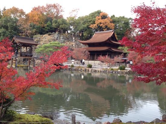 Tajimi, Japan: 紅葉が見頃 今年の紅葉の赤は本当に鮮やかです。