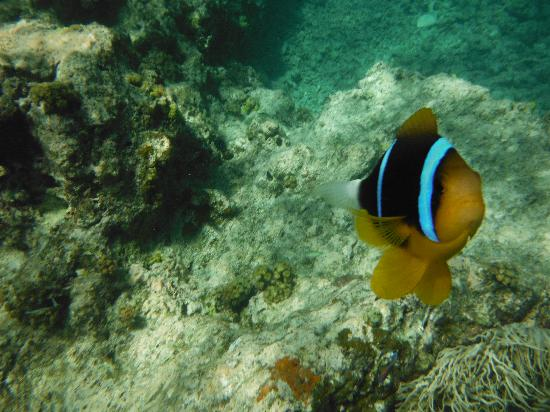 Island Time Kayaking Tours - Day Tours: Snorkeling at Paradise Cove