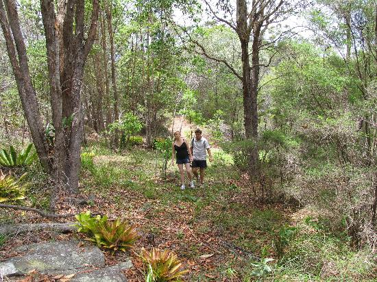 Tuckeroo Cottages: Take a forest walk to the Logan River