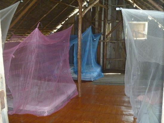 Shady Shack: Mosquito nets covering the beds.