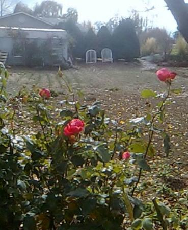 Hostel Boise: Flowers blooming in the Fall? Beautiful, Loved & cared for by Owner.